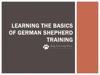 Learning the Basics of German Shepherd Training