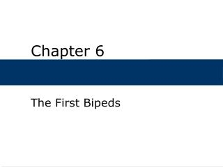 The First Bipeds