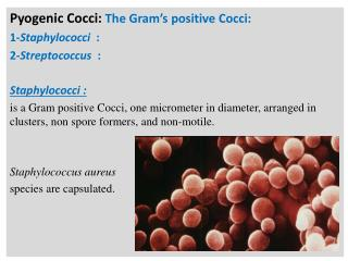 Pyogenic Cocci: The Gram s positive Cocci: 1-Staphylococci  : 2-Streptococcus  :   Staphylococci :  is a Gram positive C