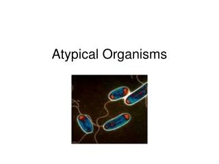 Atypical Organisms