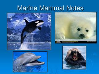 Marine Mammal Notes
