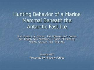 Hunting Behavior of a Marine Mammal Beneath the Antarctic Fast Ice