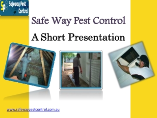Know More About Pest Control Termites