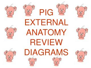 PIG EXTERNAL ANATOMY REVIEW DIAGRAMS