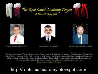 Rootcanalanatomy.blogspot