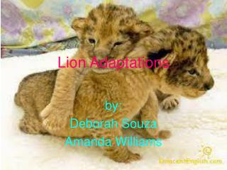 Lion Adaptations