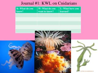 Journal 1: KWL on Cnidarians