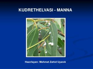 KUDRETHELVASI - MANNA