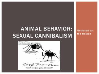 Animal Behavior: Sexual Cannibalism