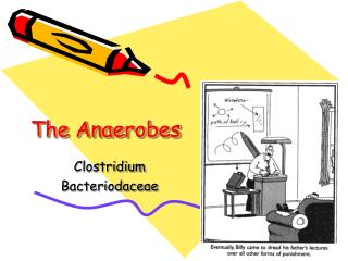 The Anaerobes