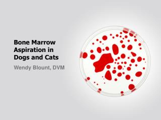 Bone Marrow  Aspiration in  Dogs and Cats