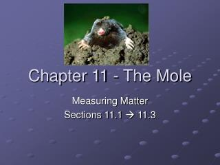 Chapter 11 - The Mole