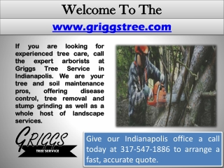 Tree Service Indianapolis - Tree Removal - Snow Removal