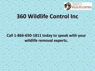 360 Wildlife Control Inc