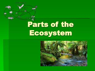 Parts of the Ecosystem