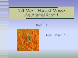 Salt Marsh Harvest Mouse An Animal Report