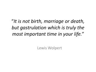 It is not birth, marriage or death, but gastrulation which is truly the most important time in your life.