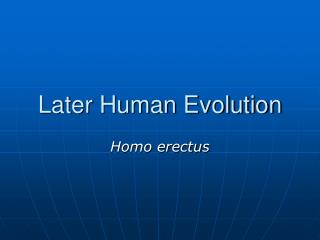 later human evolution