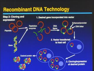 Why Recombine DNA  To produce protein products  To alter genetic inheritence new traits  For diagnostic tests   allows r