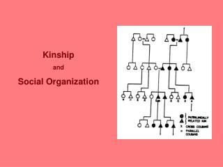 Kinship and Social Organization
