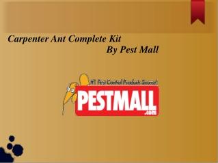 Carpenter Ant Complete Kit