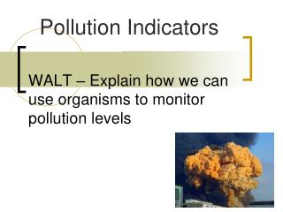 WALT   Explain how we can use organisms to monitor pollution levels