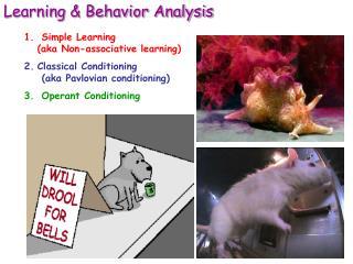 Learning  Behavior Analysis