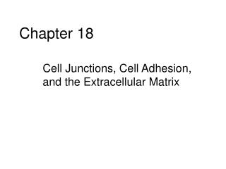 Cell Junctions, Cell Adhesion, and the Extracellular Matrix