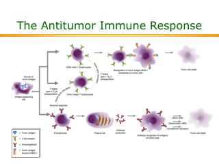 The Antitumor Immune Response