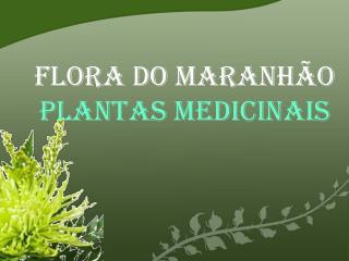 Flora do Maranh o  Plantas medicinais