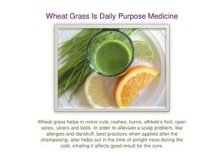 Wheat Grass Is Daily Purpose Medicine