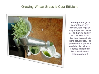 Growing Wheat Grass Is Cost Efficient