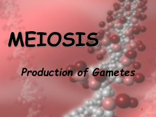 Production of Gametes
