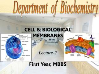 CELL  BIOLOGICAL MEMBRANES    Lecture-2  First Year, MBBS