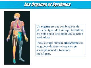 Les Organes et Syst mes