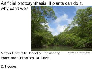 Artificial photosynthesis: If plants can do it, why can t we
