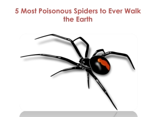 5 Most Poisonous Spiders to Ever Walk the