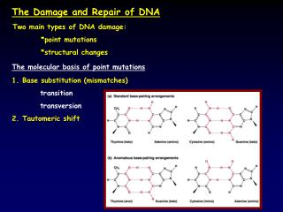 The Damage and Repair of DNA