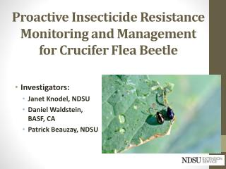 Proactive Insecticide Resistance Monitoring and Management for Crucifer Flea Beetle