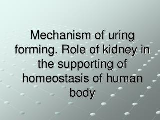 Mechanism of uring forming. Role of kidney in the supporting of homeostasis of human body