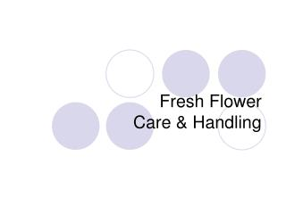 Fresh Flower Care  Handling