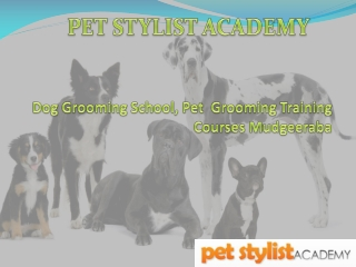Pet Grooming Certification