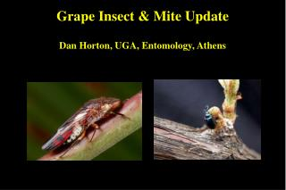 Grape Insect  Mite Update  Dan Horton, UGA, Entomology, Athens