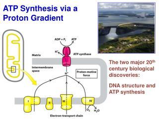 ATP Synthesis via a Proton Gradient