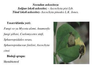 Tsrr fatda yeri: Fungi v ya Mycota almi, Anamorfic fungi s bsi, Coelomycetes sinfi, Sphaeropsidales sirasi, Sphaeropsida
