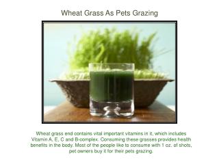 Wheat Grass As Pets Grazing