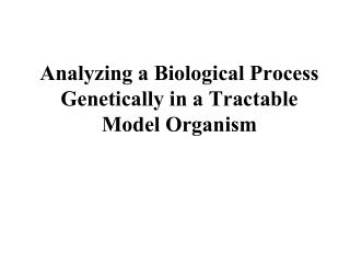 Analyzing a Biological Process Genetically in a Tractable Model Organism