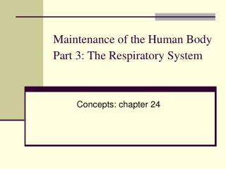 Maintenance of the Human Body Part 3: The Respiratory System