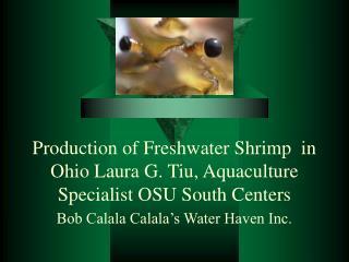 Production of Freshwater Shrimp  in Ohio Laura G. Tiu, Aquaculture Specialist OSU South Centers