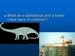 What do a diplodocus and a tower crane have in common